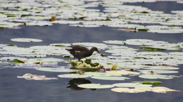 Natural Reserve Lago di Piano